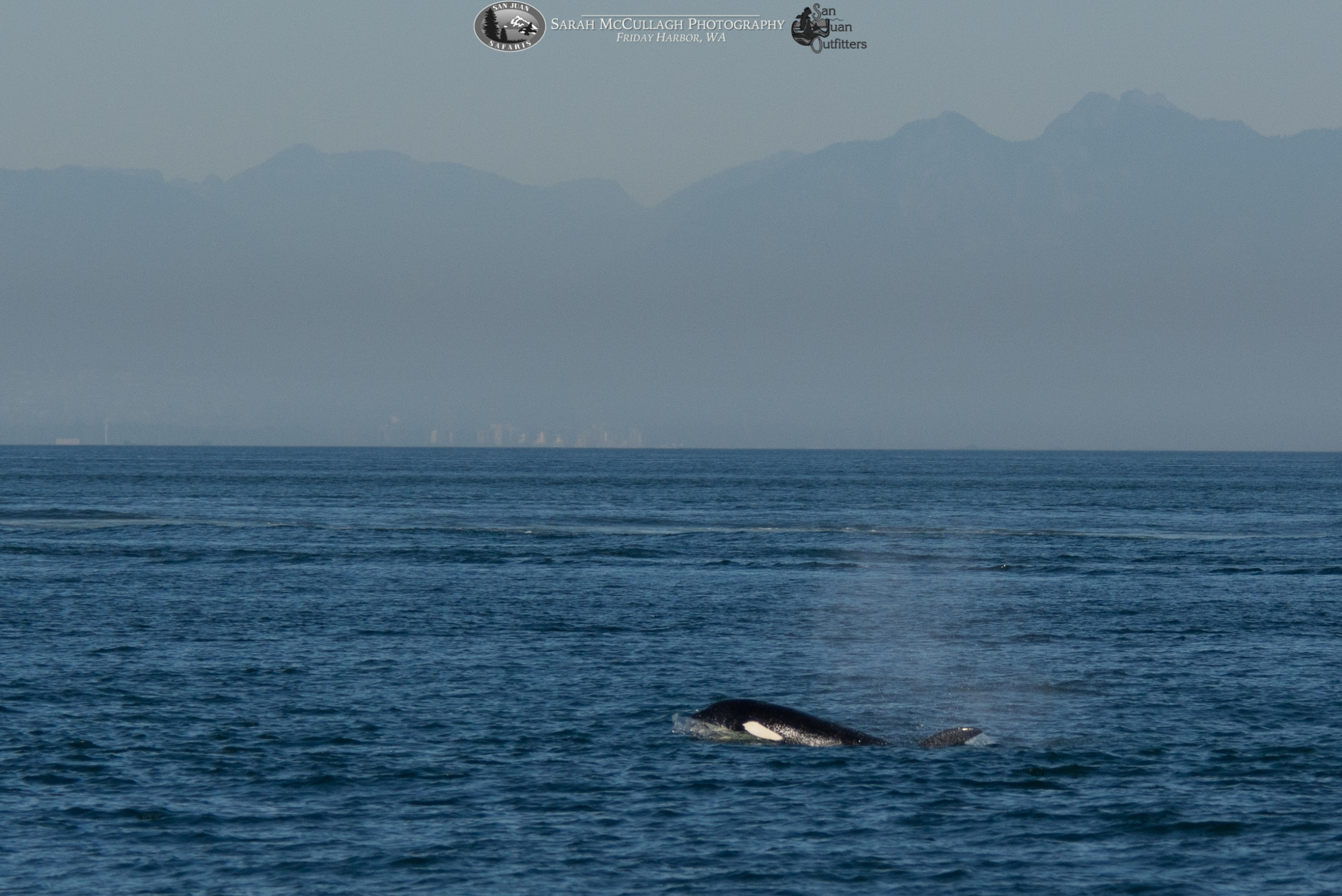 A Cruise To The Canadian Gulf Islands For Orcas San Juan
