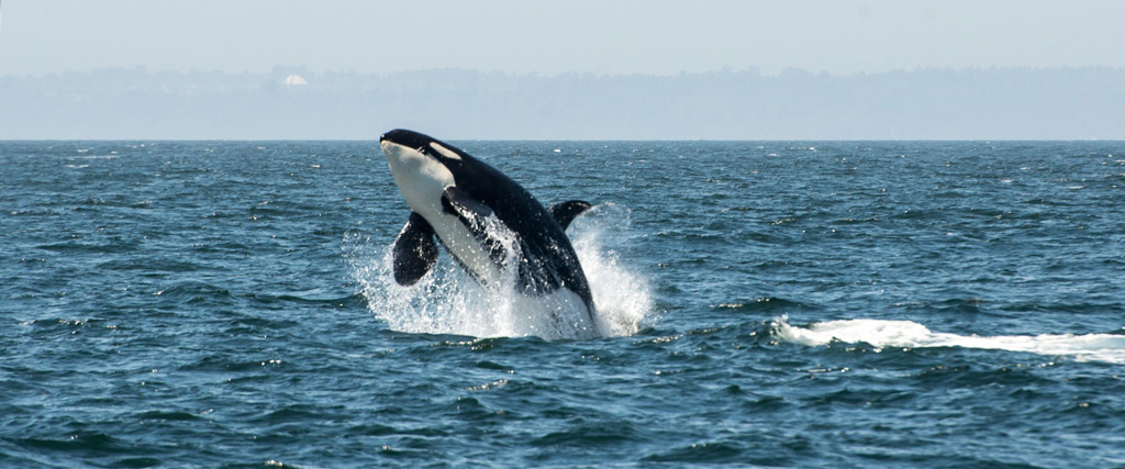 Vacation Rentals On Orca Island