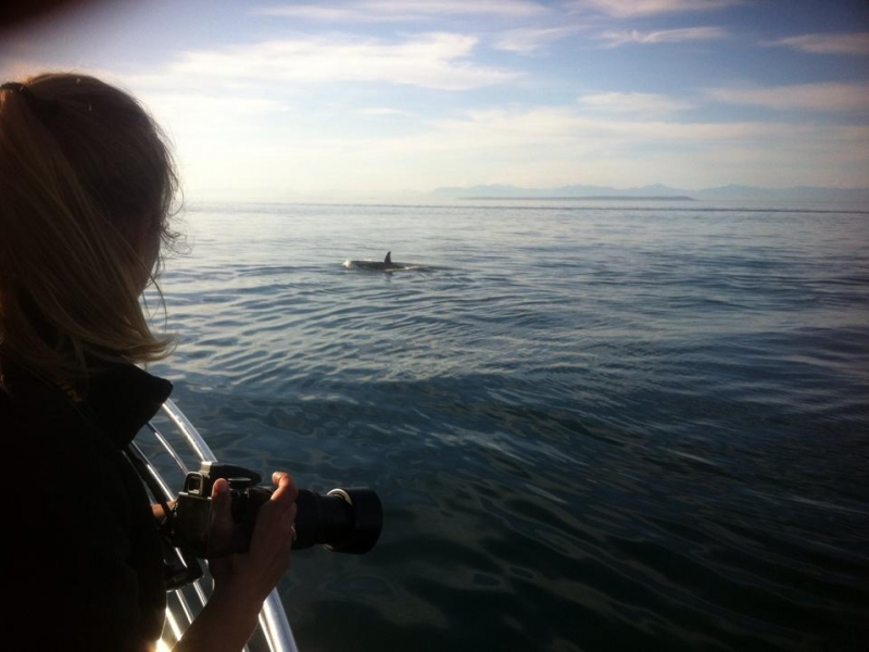 Naturalist watching orcas pass by the boat