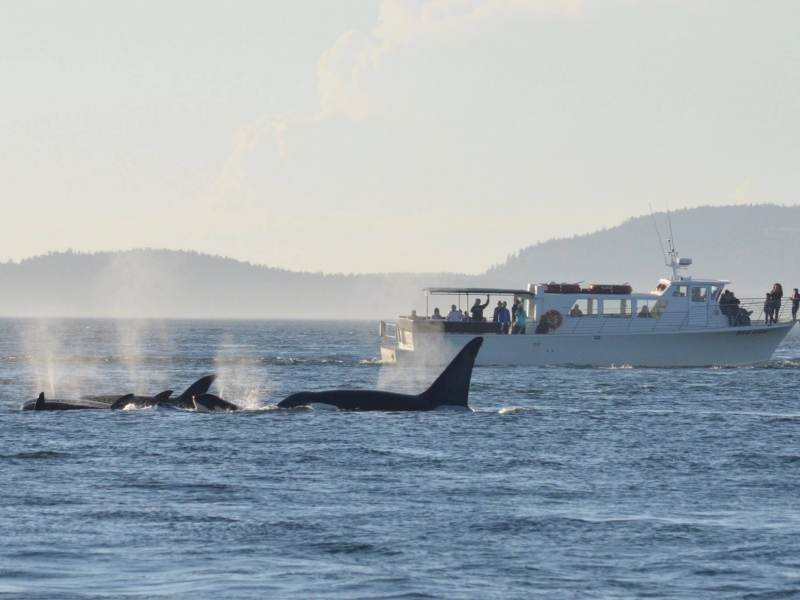 M/V Sea Lion and Killer whales