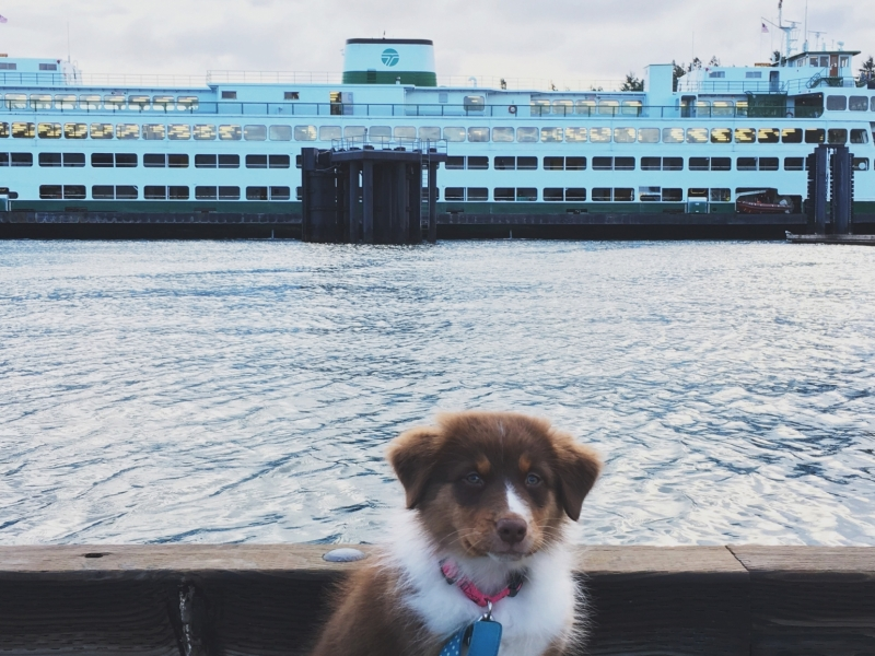 Dog with San Juan Island Ferry