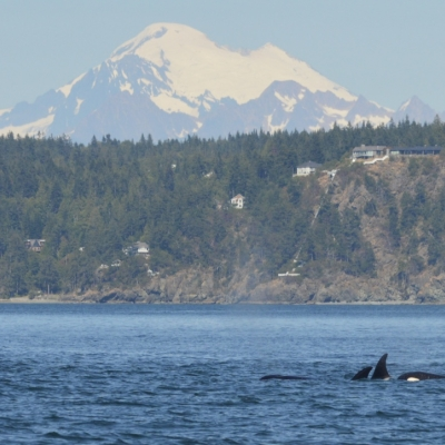 T36B's with Mt. Baker behind
