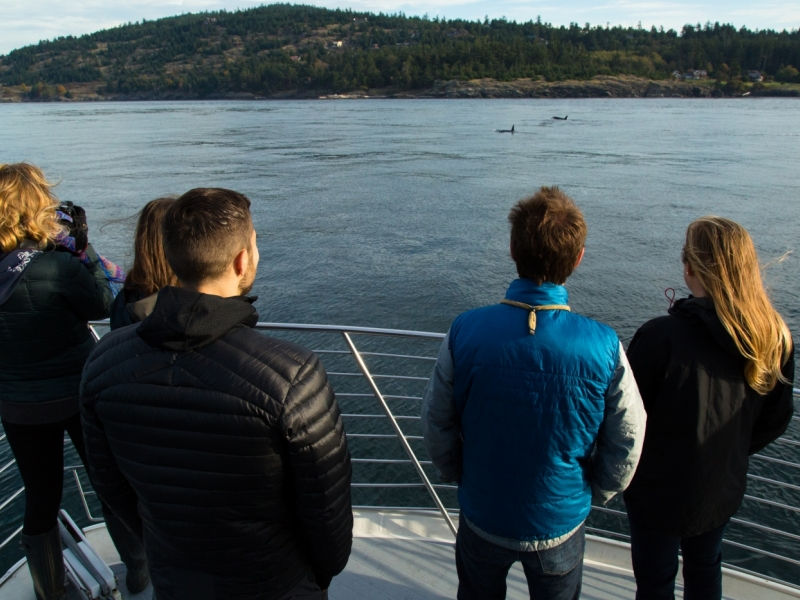 looking at killer whales