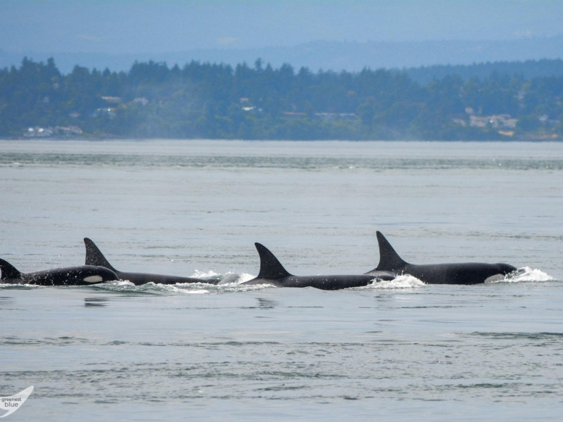 Seattle Whale Watching to Friday Harbor