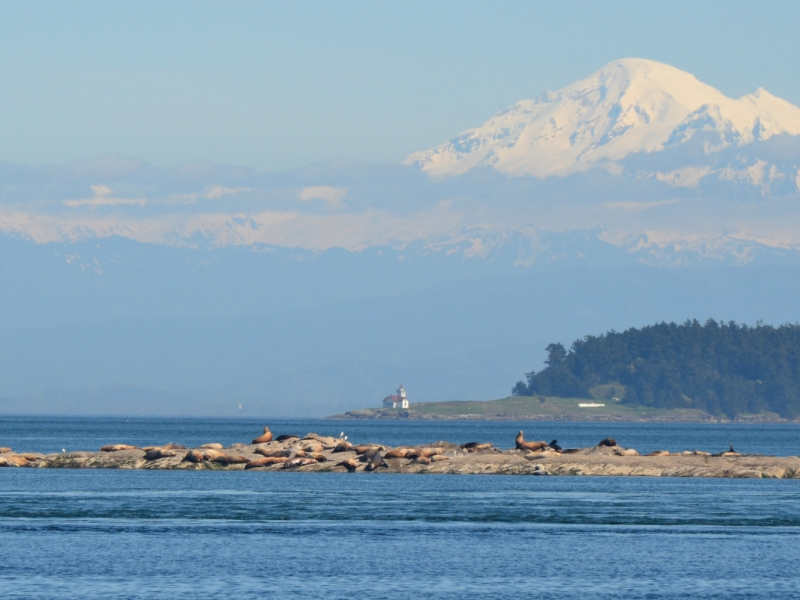 Mount Baker, Patos Island Lighthouse, and Steller's Sea Lions