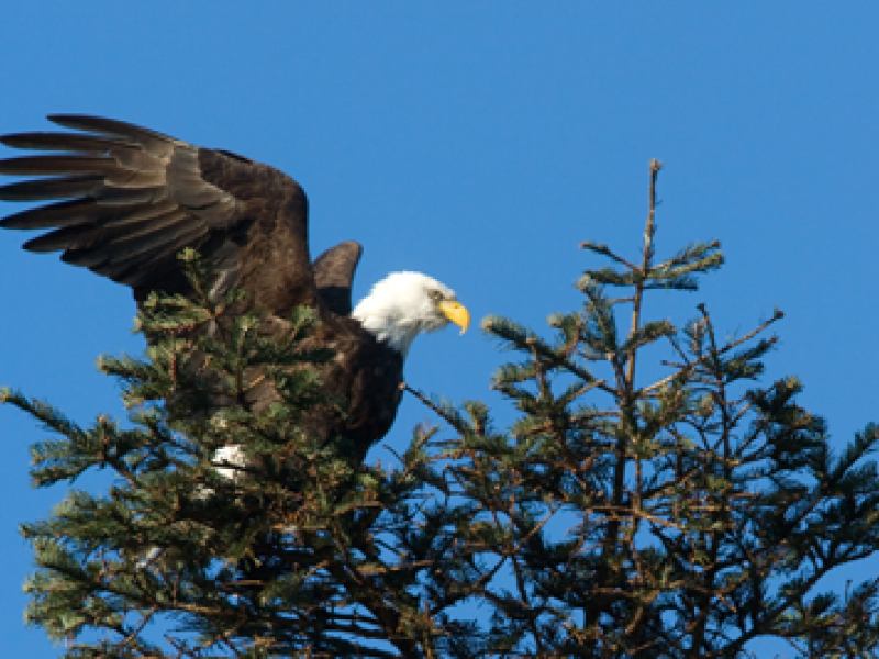 Birds of the San Juan Islands  - San Juan Safaris
