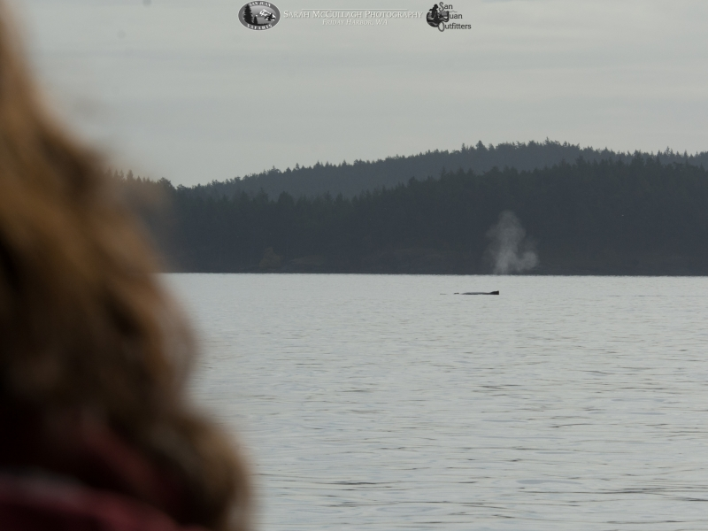 Watching the humpback whale!