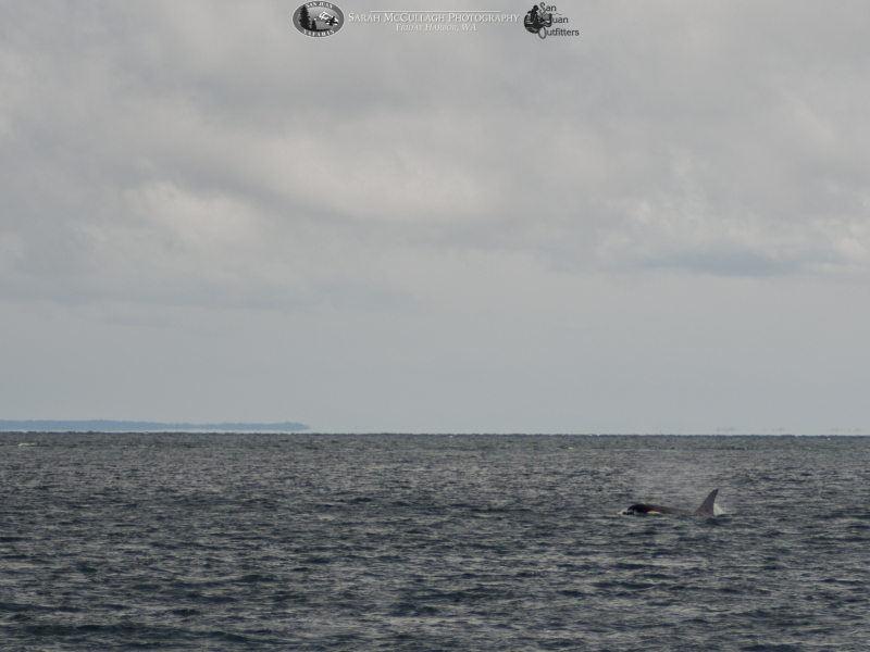 Incoming orca