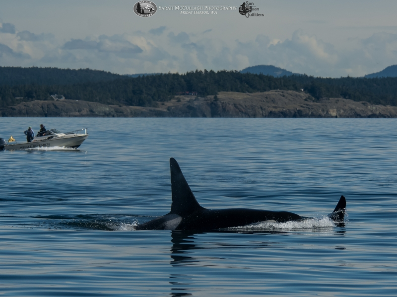 T137A & T046E with the Center for Whale Research in the background