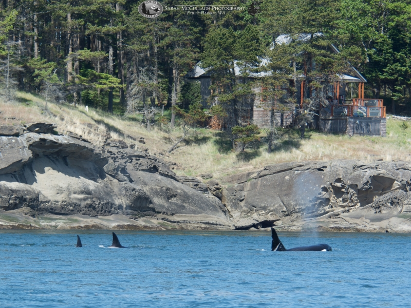 """T063 """"Chainsaw"""" and other orcas"""