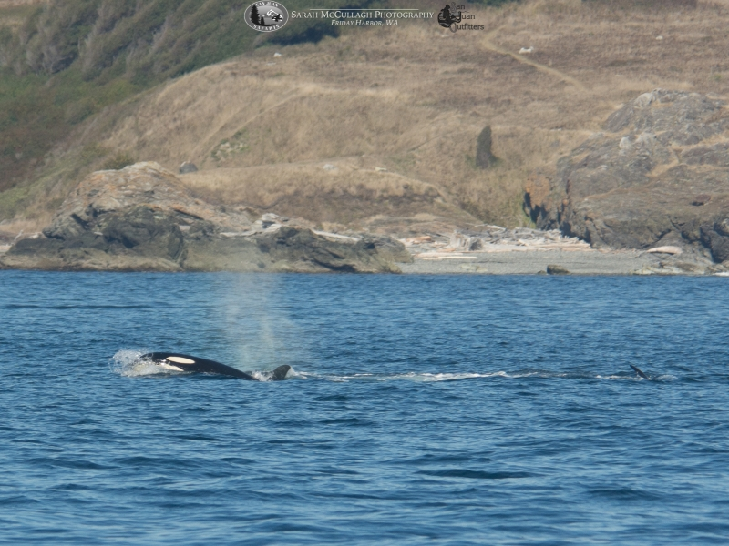 Fishing Southern Resident killer whales