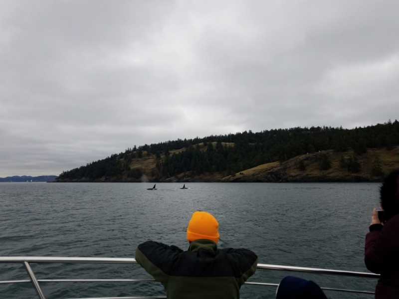 Watching for Orca Whales near San Juan Island