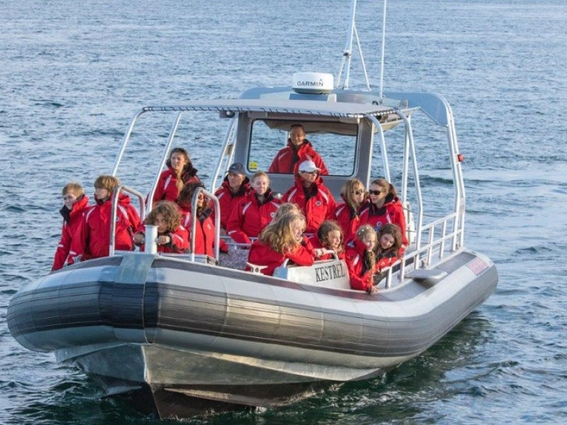 Zodiac whale watching near Seattle with San Juan Safaris