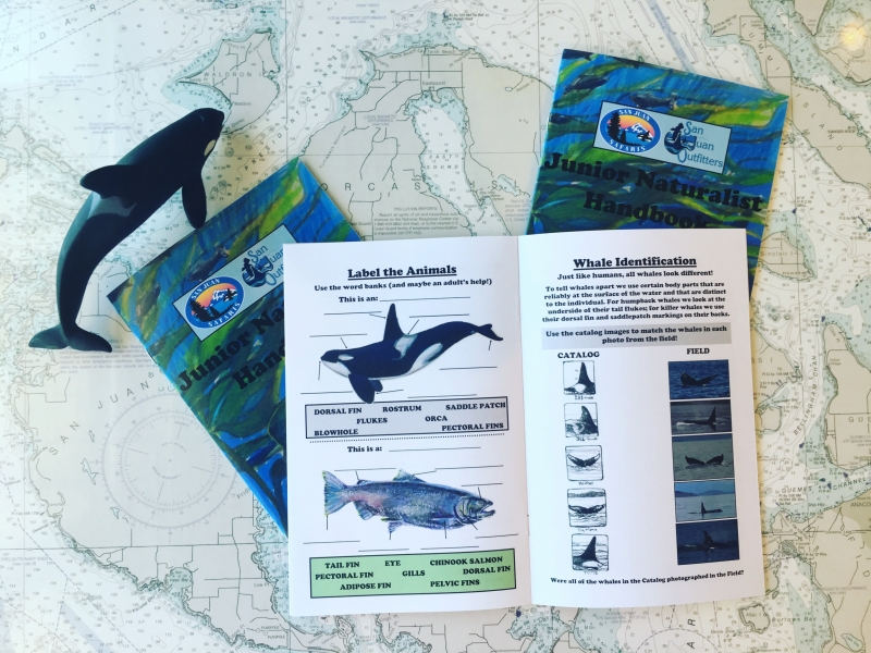 Junior Naturalist Whale Watch Program - San Juan Safaris Whale Watching near Seattle