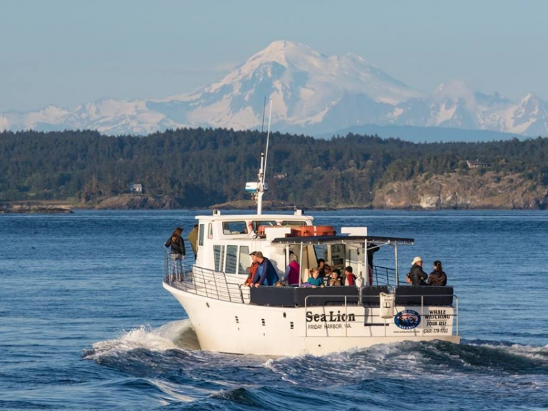 Killer Whale Watching for Southern Resident Orcas near Seattle