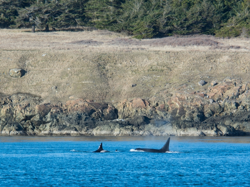 T090's and T101's on the south end of Lopez Island
