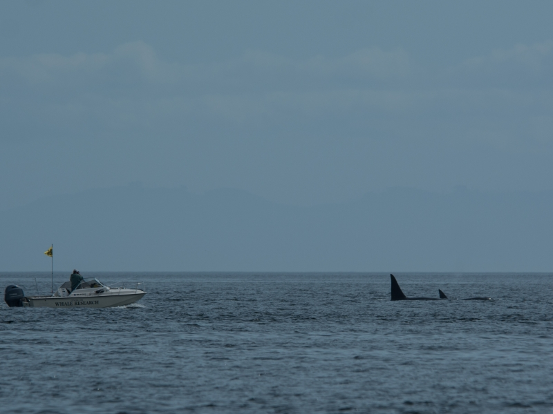 The Center for Whale Research with T010C and T010