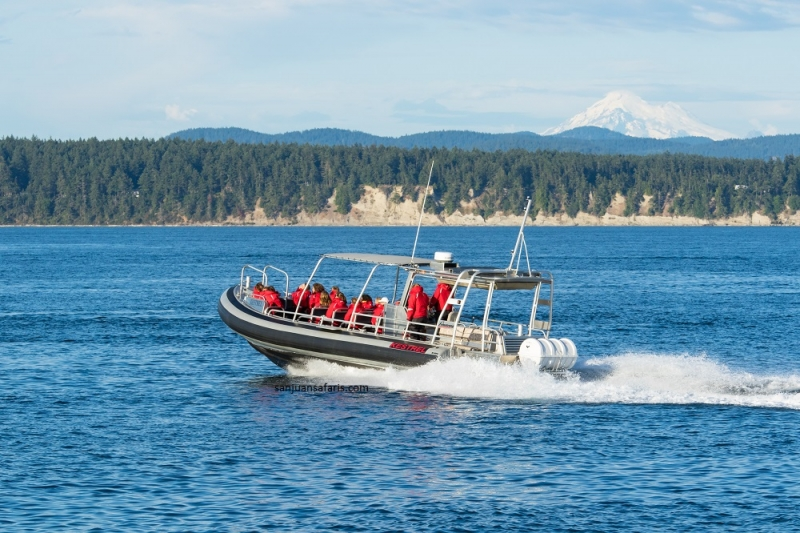Zodiac whale watch boat with Mt. Baker