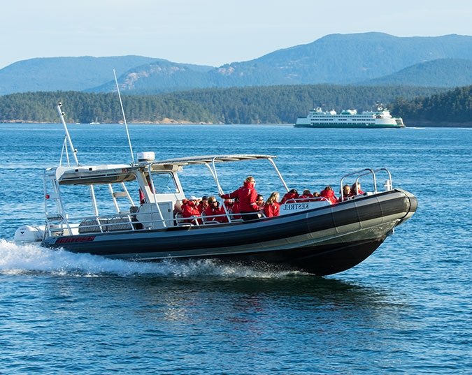 MV Kestrel Whale and Wildlife Viewing Vessel