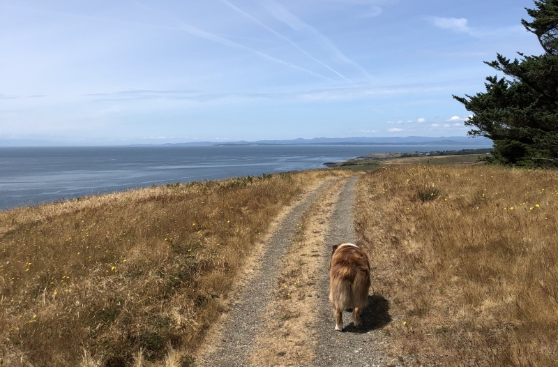 Hiking on San Juan Island with dog